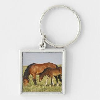 Feral Horse Equus caballus) wild horse mother Keychain