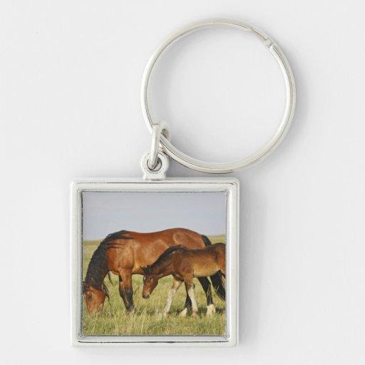 Feral Horse Equus caballus) wild horse mother Key Chain