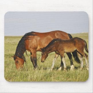Feral Horse Equus caballus) wild horse mother Mouse Pad