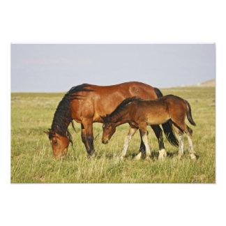 Feral Horse Equus caballus) wild horse mother Art Photo