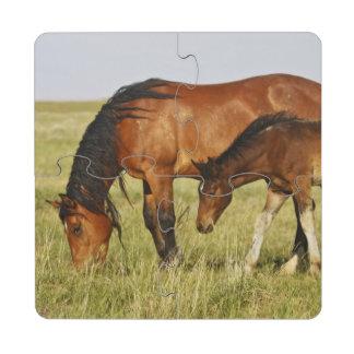 Feral Horse Equus caballus) wild horse mother Puzzle Coaster