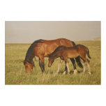 Feral Horse Equus caballus) wild horse mother Wood Canvases