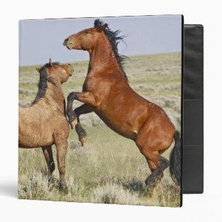 Feral Horse Equus caballus) wild horses 2 Binder