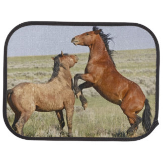 Feral Horse Equus caballus) wild horses 2 Car Mat