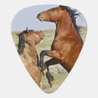 Feral Horse Equus caballus) wild horses 2 Guitar Pick