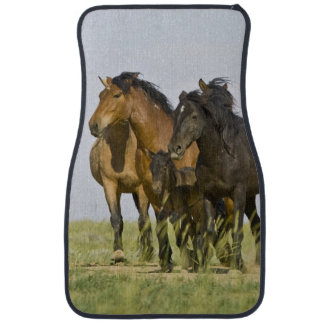 Feral Horse Equus caballus) wild horses 3 Car Floor Mat