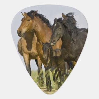 Feral Horse Equus caballus) wild horses 3 Guitar Pick