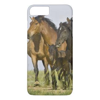 Feral Horse Equus caballus) wild horses 3 iPhone 7 Plus Case