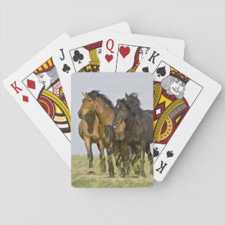 Feral Horse Equus caballus) wild horses 3 Playing Cards
