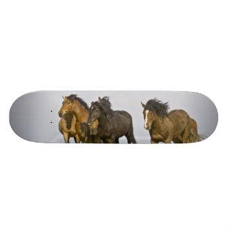 Feral Horse Equus caballus) wild horses 3 Skateboard Deck