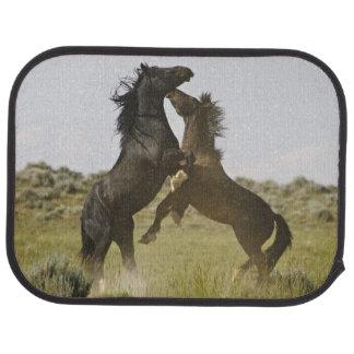 Feral Horse Equus caballus) wild horses Car Mat