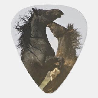Feral Horse Equus caballus) wild horses Guitar Pick