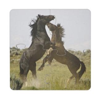 Feral Horse Equus caballus) wild horses Puzzle Coaster