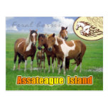 Feral  horses, Assateague Island Nat. Seashore Postcard