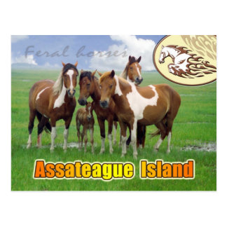 Feral  horses, Assateague Island Nat. Seashore Postcard