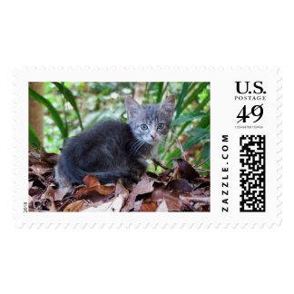 Feral Kitten Postage Stamp
