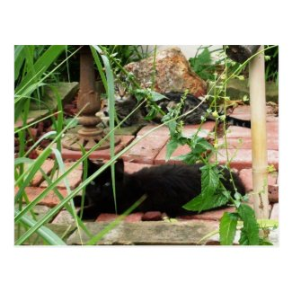 Feral Kittens in Garden Postcard