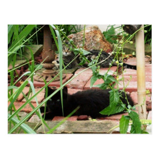 Feral Kittens in Garden Postcard Post Card