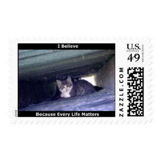 Feral Kittens Postage Stamp