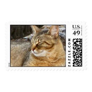 Feral kitty custom stamp