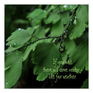Fern and Raindrops Motivational Poster