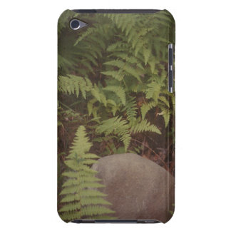 Fern and Rock iPod Case iPod Touch Cases