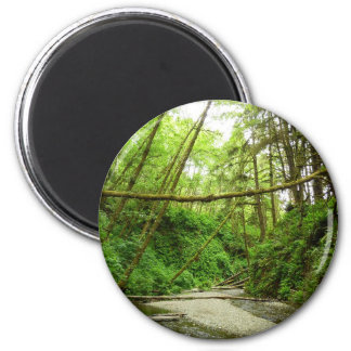 Fern Canyon I at Redwood National Park 2 Inch Round Magnet
