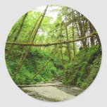 Fern Canyon I at Redwood National Park Classic Round Sticker