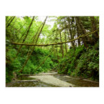 Fern Canyon I at Redwood National Park Postcard