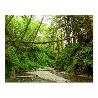 Fern Canyon I at Redwood National Park Postcard