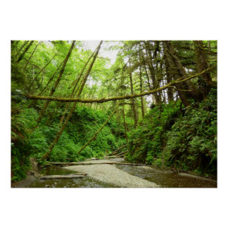 Fern Canyon I in Redwood National Park Poster