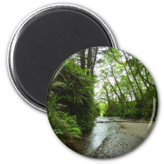 Fern Canyon II at Redwood National Park 2 Inch Round Magnet