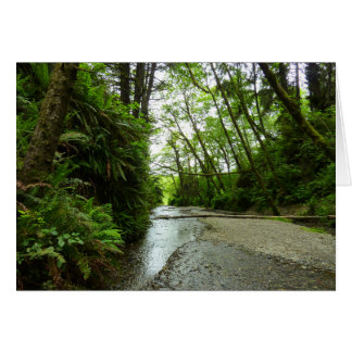 Fern Canyon II at Redwood National Park Card