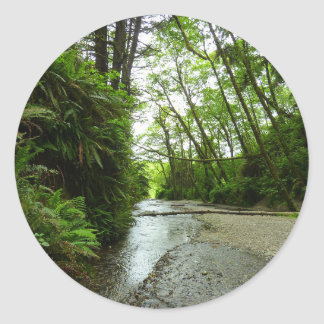 Fern Canyon II at Redwood National Park Classic Round Sticker