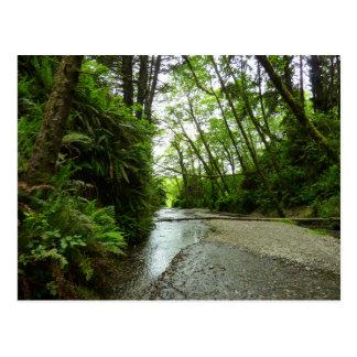 Fern Canyon II at Redwood National Park Postcard