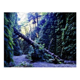 Fern Canyon, Prairie Creek Postcard