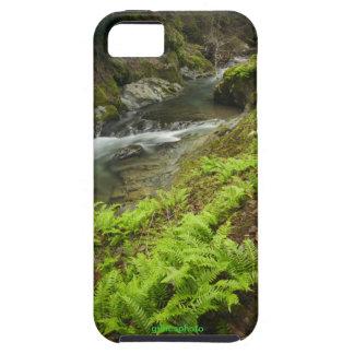 fern creek winter beauty iPhone 5 covers