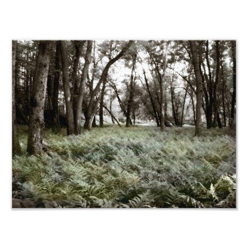 Fern Field in a Floodplain Forest Photo Print