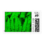 Fern Forest Stamp