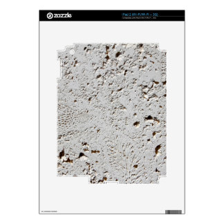 Fern Fossil Tile Surface Closeup Decals For iPad 2