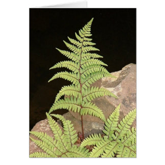 Fern frond at night card
