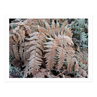 Fern Frond Frosted Postcard