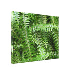 Fern Fronds I Green Nature Canvas Print