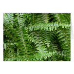 Fern Fronds I Green Nature Card