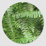 Fern Fronds I Green Nature Classic Round Sticker