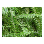 Fern Fronds I Green Nature Photo Print