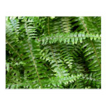 Fern Fronds I Green Nature Postcard