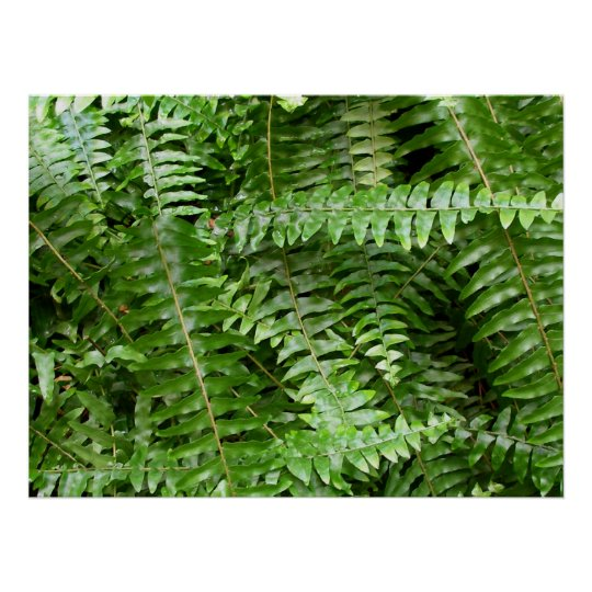 Fern Fronds I Green Nature Poster