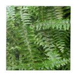 Fern Fronds I Green Nature Tile