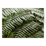 Fern Fronds II Dark Green Nature Card
